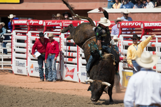 Doors Open bucking bull