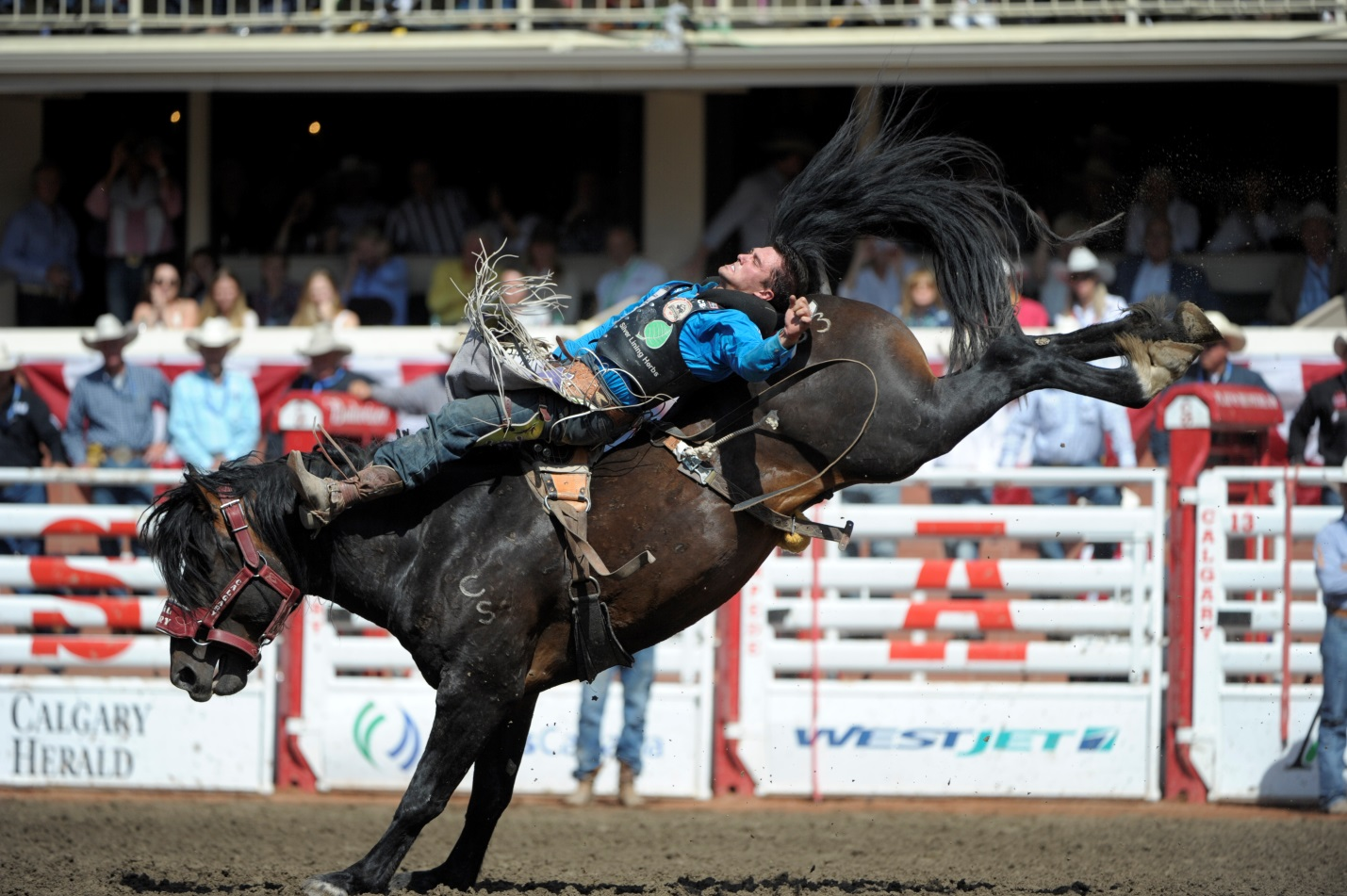 Stampede Bucking Stock Selected For The Canadian Finals