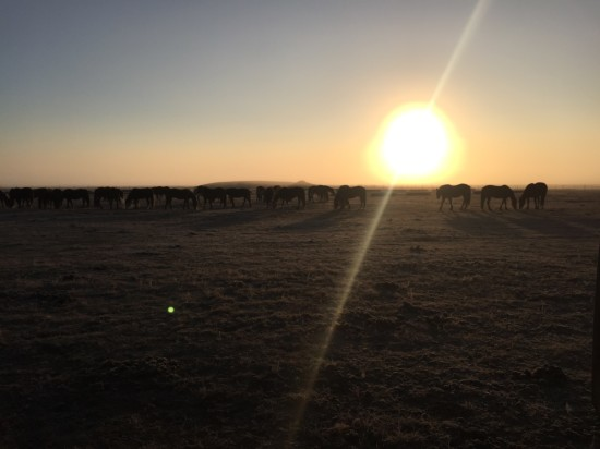 A peaceful morning at the Stampede Ranch