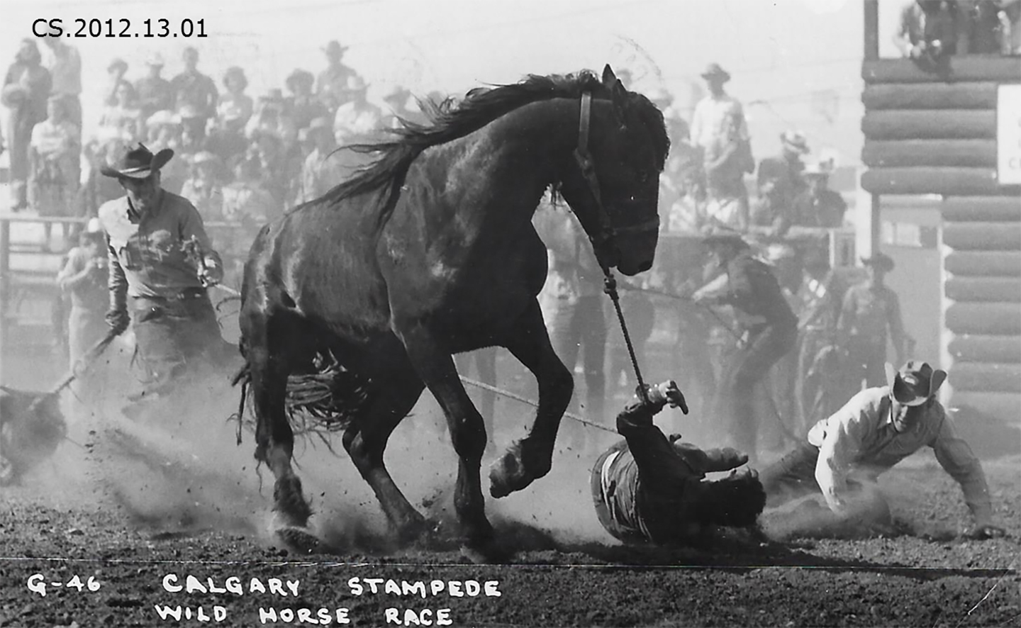 Two Fallen Cowboys In A Wild Horse Race Calgary Stampede