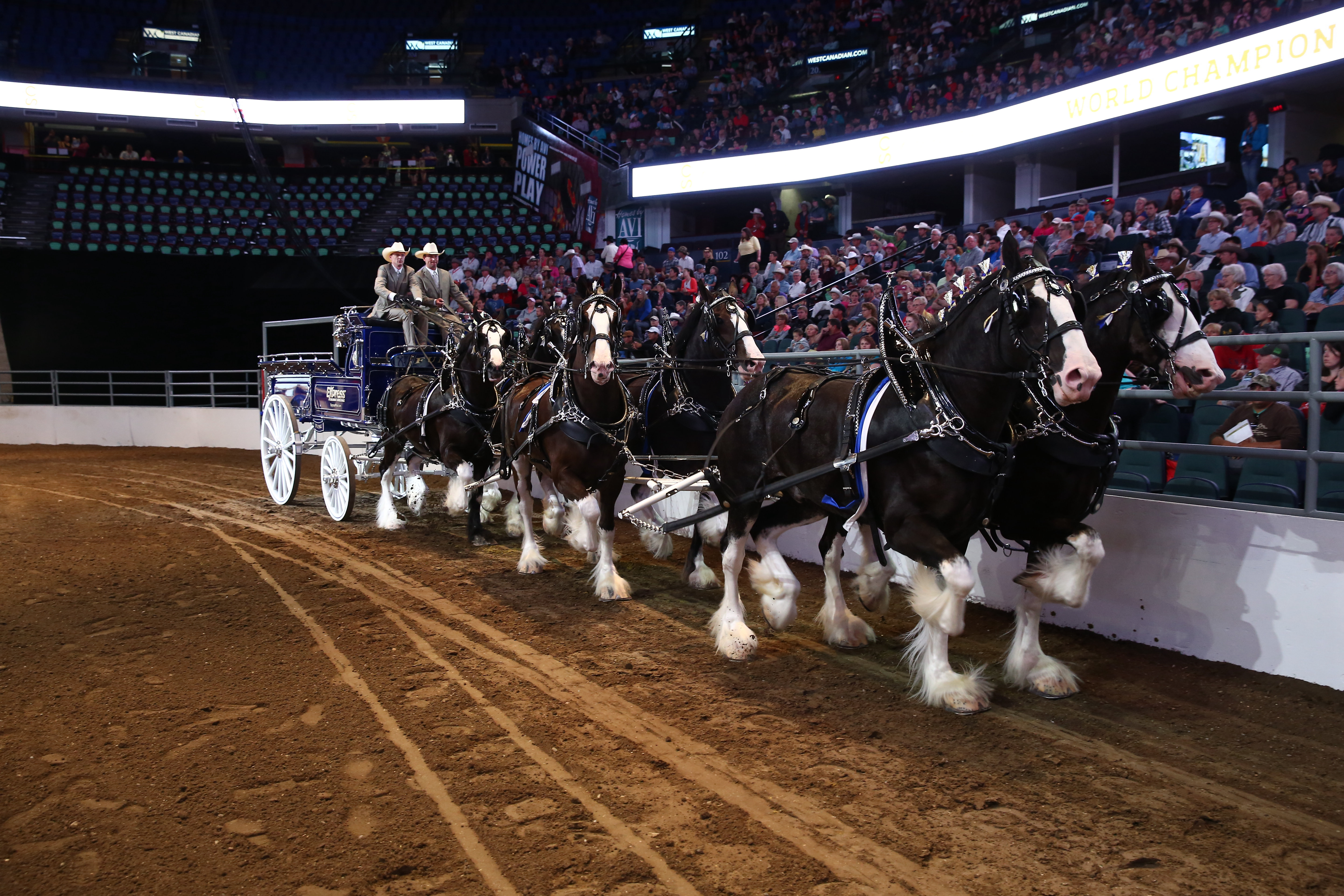 Calgary Stampede Heavy Horse Show July 5 11 2018
