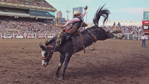 NOVICE SADDLE BRONC