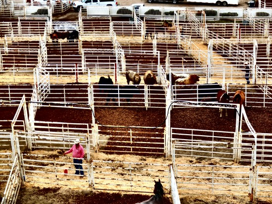 Behind The Rodeo Chutes Blog