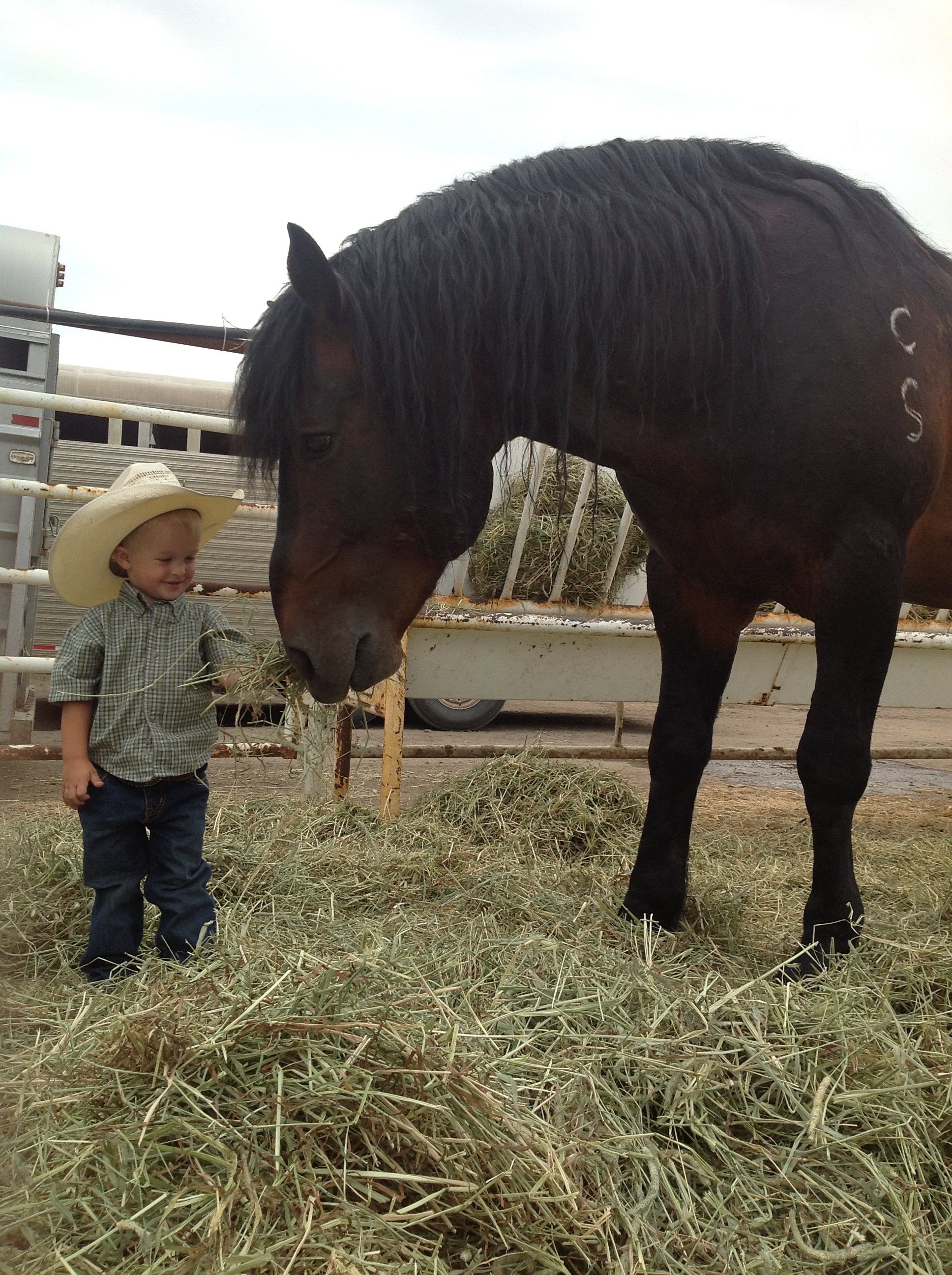 Calgary Stampede Inducted Into The Ellensburg Rodeo Hall