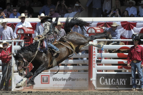 Two Nights Two Buckles For Stampede Stock Blog