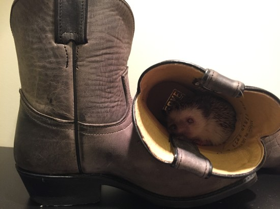 Yahoo! I've got my boots, my hog and I'm ready for Stampede 2015.