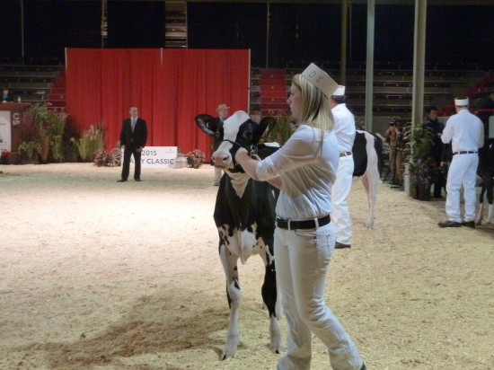 2015 Dairy Classic Show: Summer Yearlings.