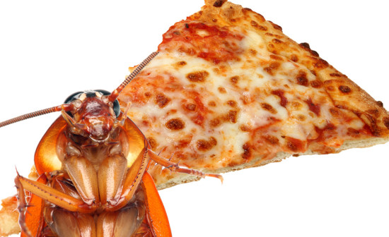 cockroach pizza_2