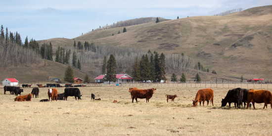 May 2015 - OH Ranch Herd pic 1 credit Hudyma Photography