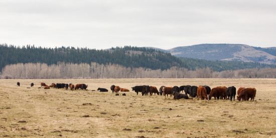 May 2015 - OH Ranch Herd pic 2 credit Hudyma Photography
