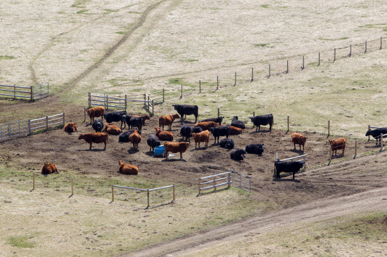 May 2015 - OH Ranch Herd pic 3 credit Hudyma Photography