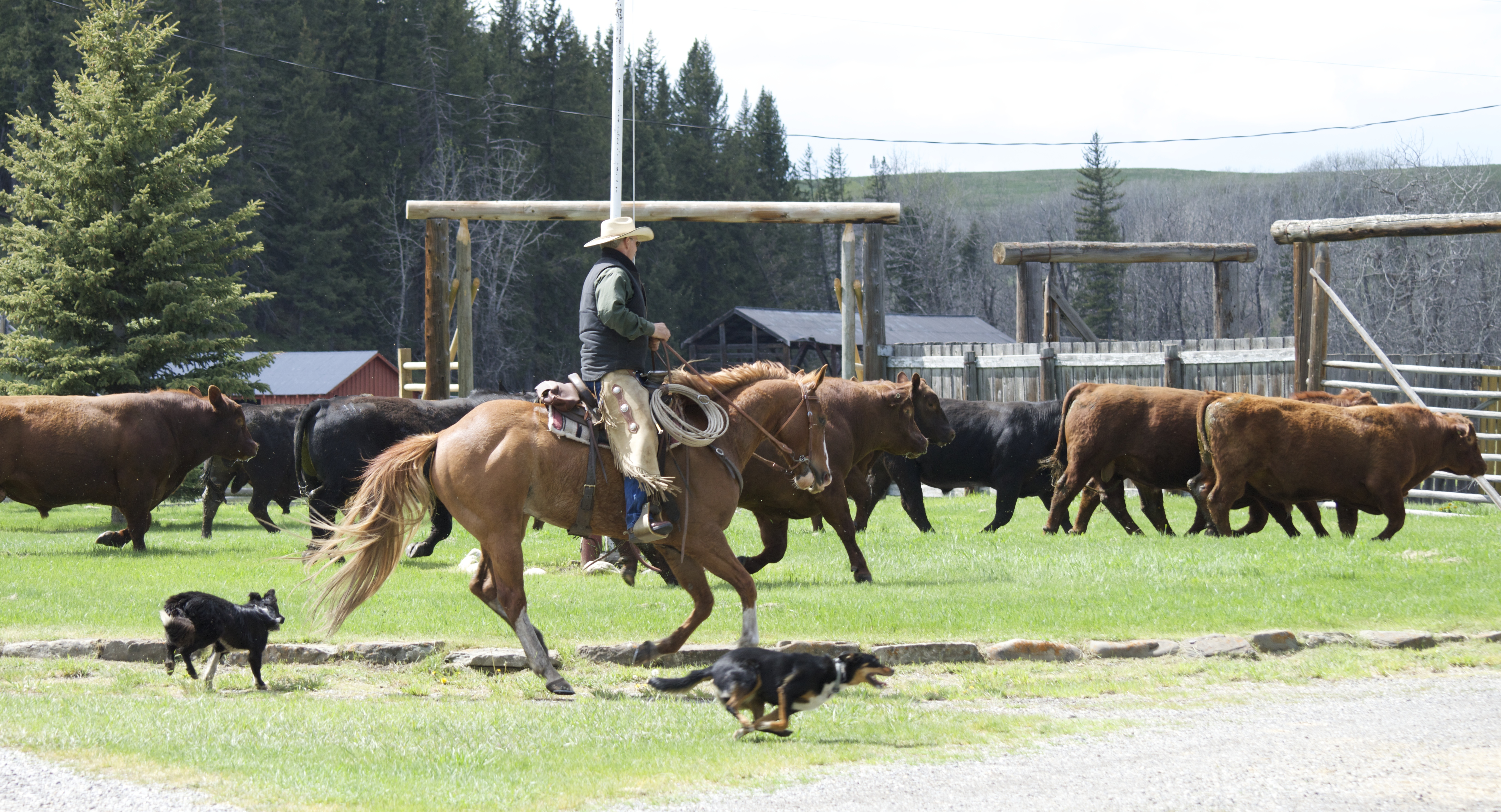The Oh Ranch Opens Its Gates For A Special One Day Event