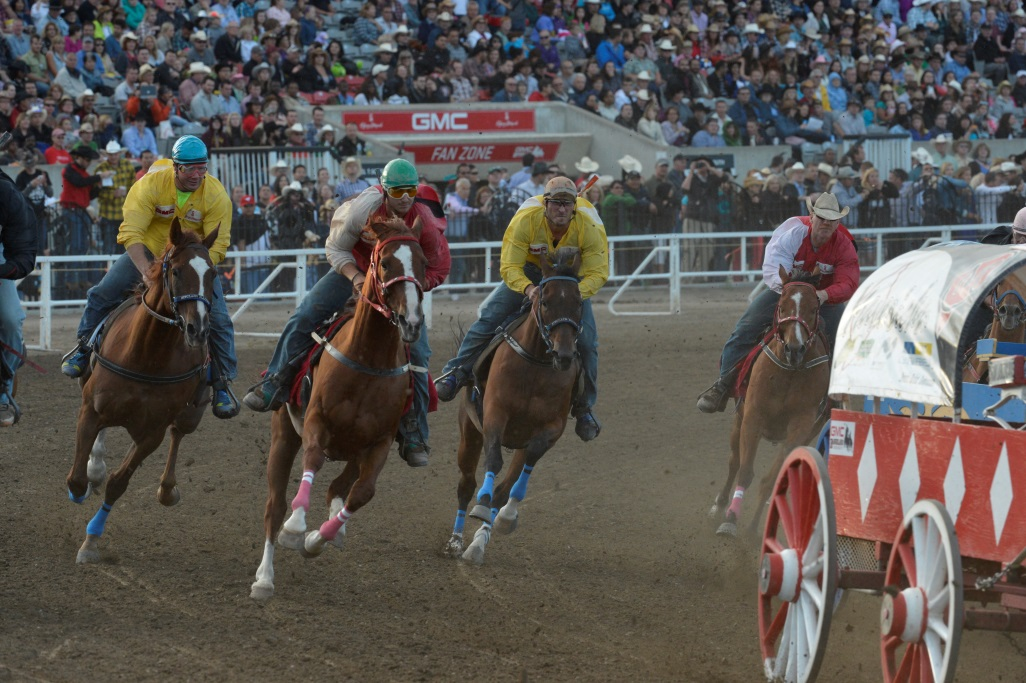 Chuckwagon Drivers Get Ready To Race Under A New Calgary