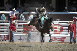 Reckless Margie competing at the 2015 Calgary Stampede