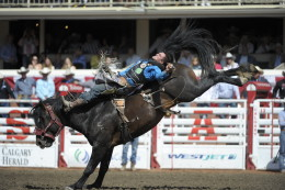 Special Delivery competing at the Calgary Stampede