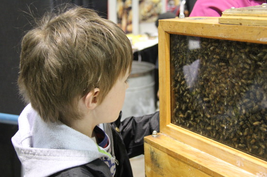 Come learn how bees make honey at Aggie Days on Saturday, April 9 and Sunday, April 10 at the Agrium Western Event Centre on Stampede Park