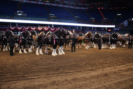 All horses standing