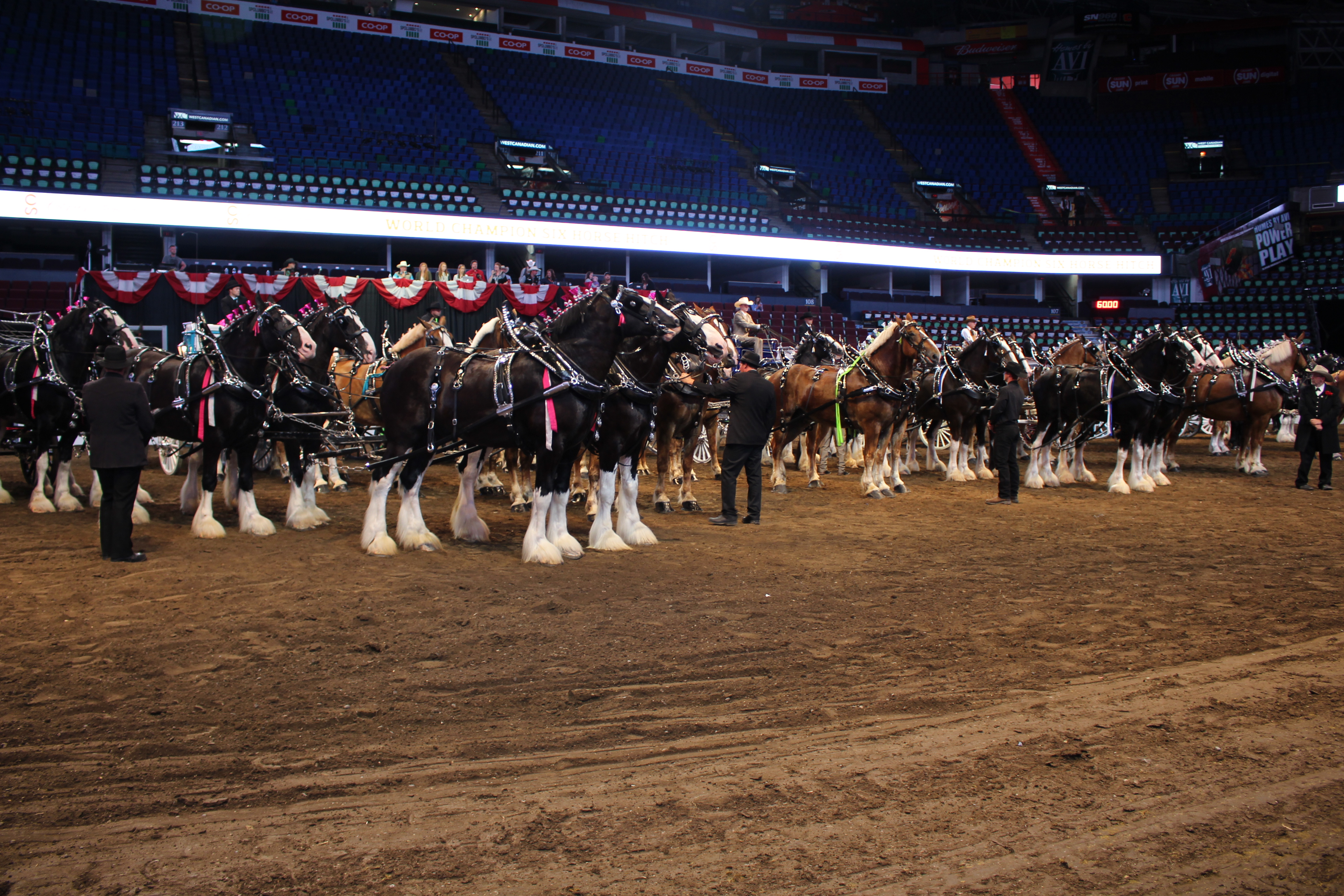Heavy Horse Hitches At The 2016 Calgary Stampede Blog
