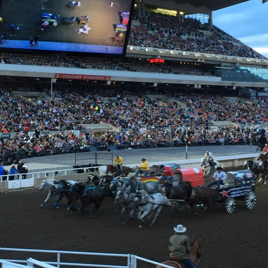 Exciting finish to one of the chuckwagon races