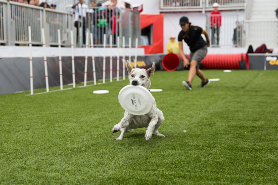 The Canine Stars at the Dog Bowl