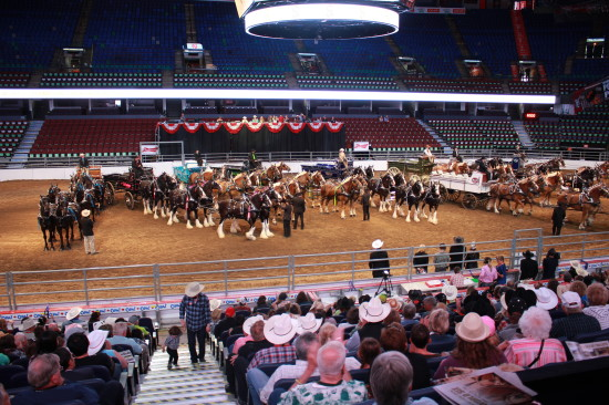 Heavy Horse Show in the Scotiabank Saddledome