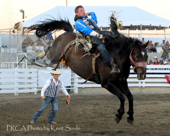 Stampede Rodeo Stock