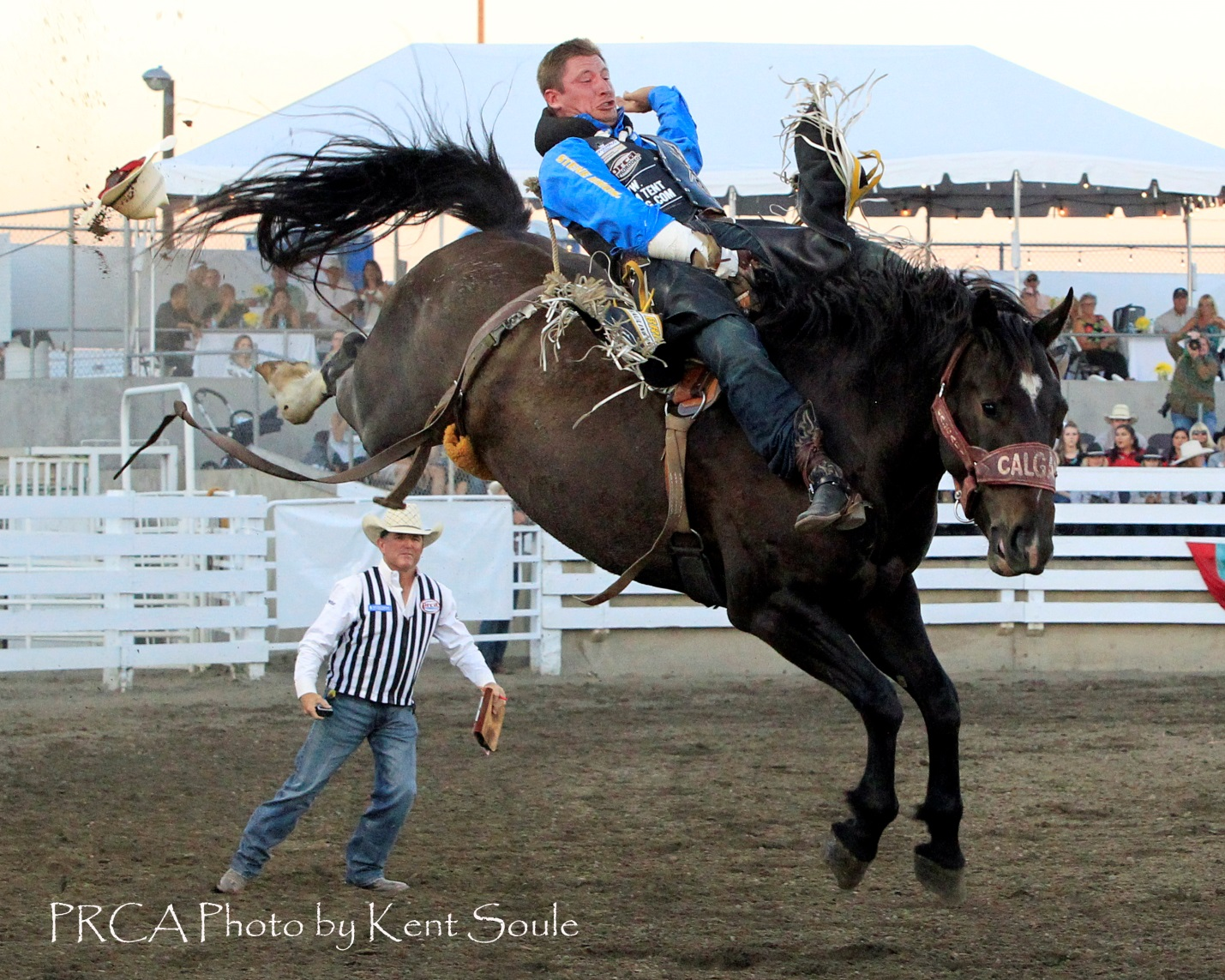 Championship Fall For Stampede Stock Blog