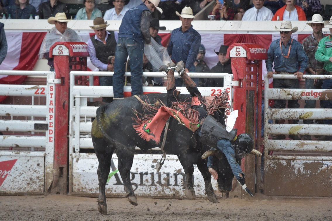 8 Buckles And A Super Star Bronc At The Canadian Finals
