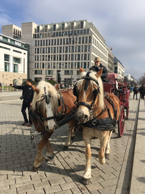 "Our new friends and ""neigh-bours"" in Berlin!"