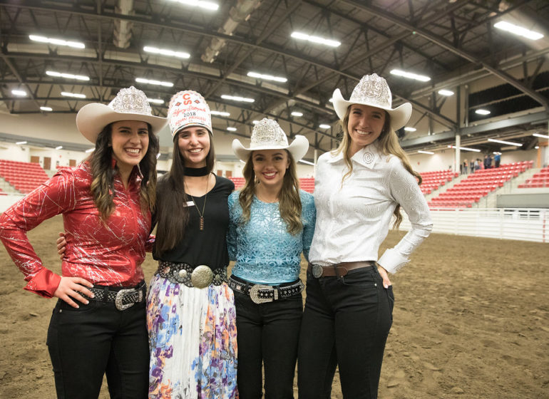 Blog Blog About The Calgary Stampede