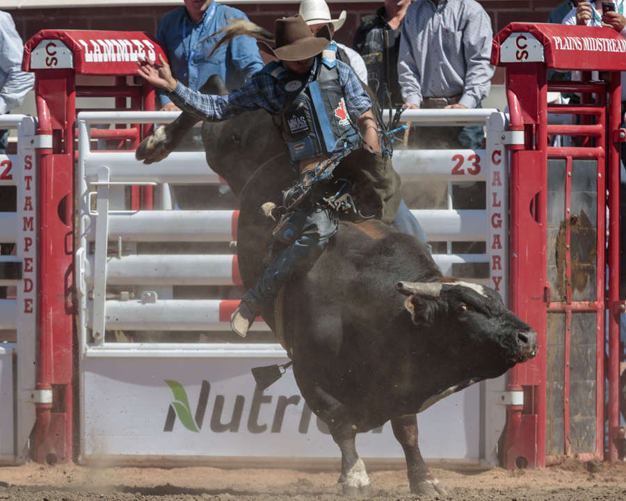 Cash Call Friday At The Calgary Stampede Blog