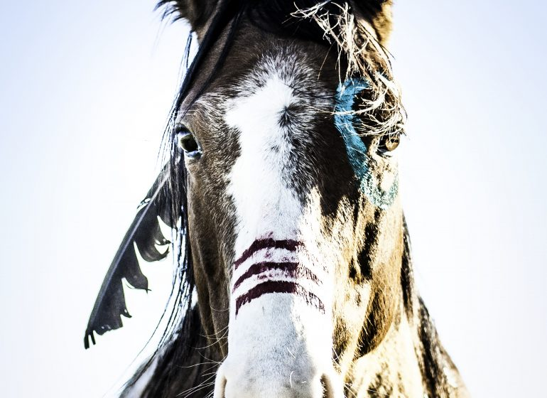 Canadian Rodeo Finals Wrap Up Blog