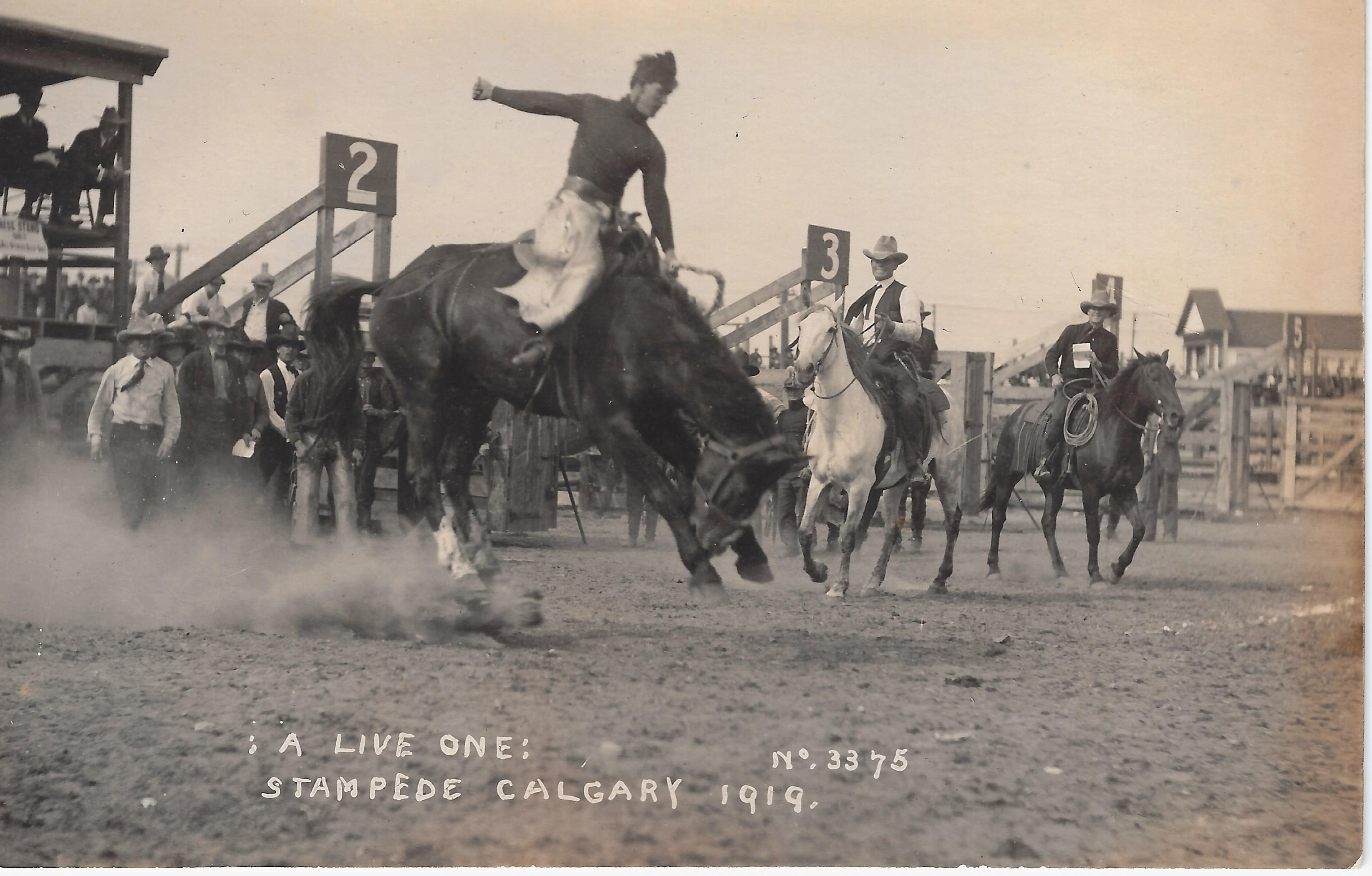 Victory Stampede Series Rodeo A Celebration Of Western