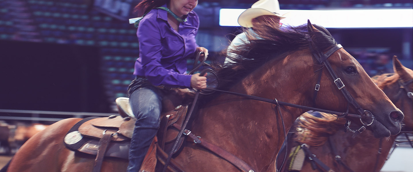 Team Cattle Penning Championships Calgary Stampede