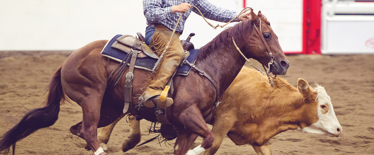 Working Cow Horse Classic Calgary Stampede