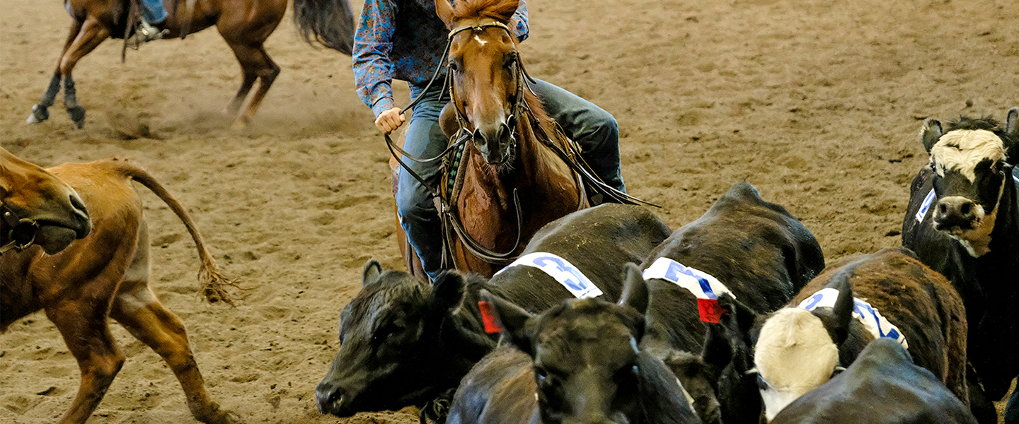 Team Cattle Penning Championship Calgary Stampede