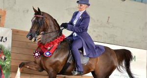 Region 17 Arabian Horse Association Championships