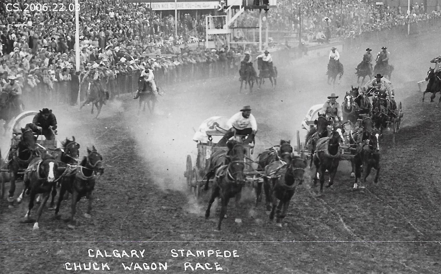 Historical Photos Chuckwagon Race Calgary Stampede