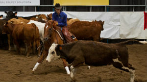 Cutting Horse Futurity