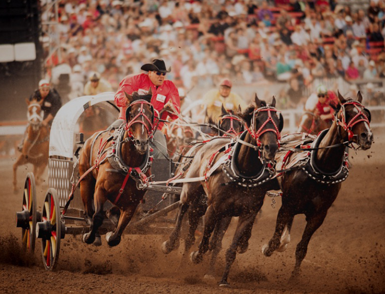 Gmc Rangeland Derby Amp Chuckwagon Races Calgary Stampede July 3 12 2020