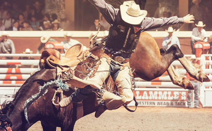 Calgary Stampede Shows July 6 15 2018