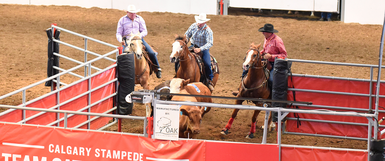Team Cattle Penning Calgary Stampede